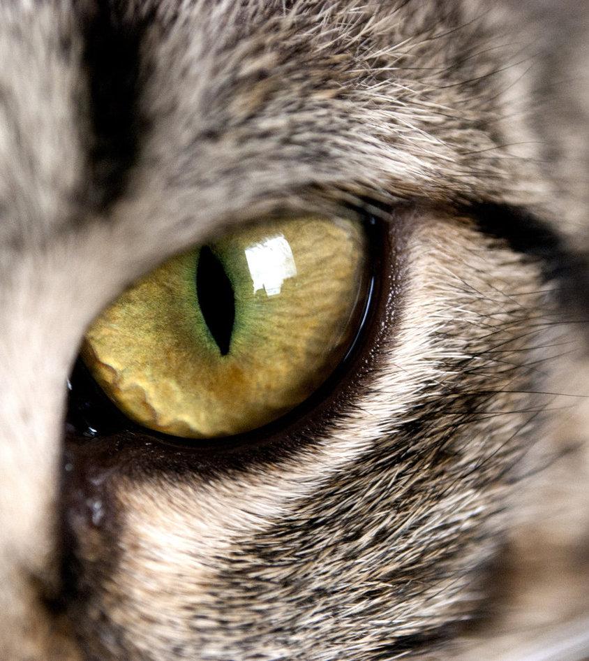 Кошки – видеть во сне кошку – предвещает неудачу, если только вы не сможете убить ее или прогнать с глаз долой.