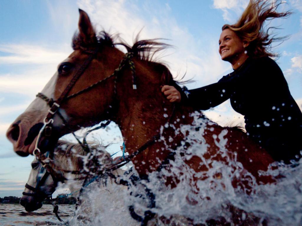 К чему снится лошадь женщине? Сонник лошадь во сне