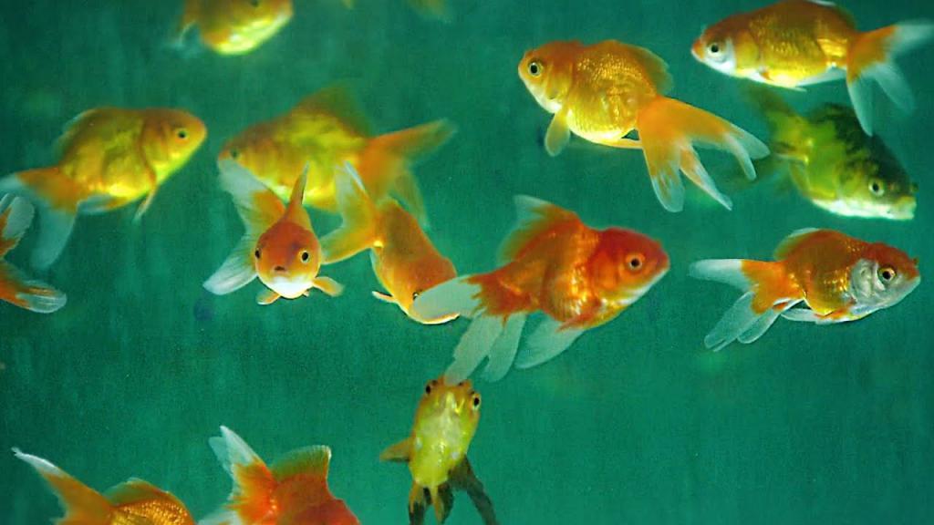 К чему снится рыба - значение сна рыба по соннику
