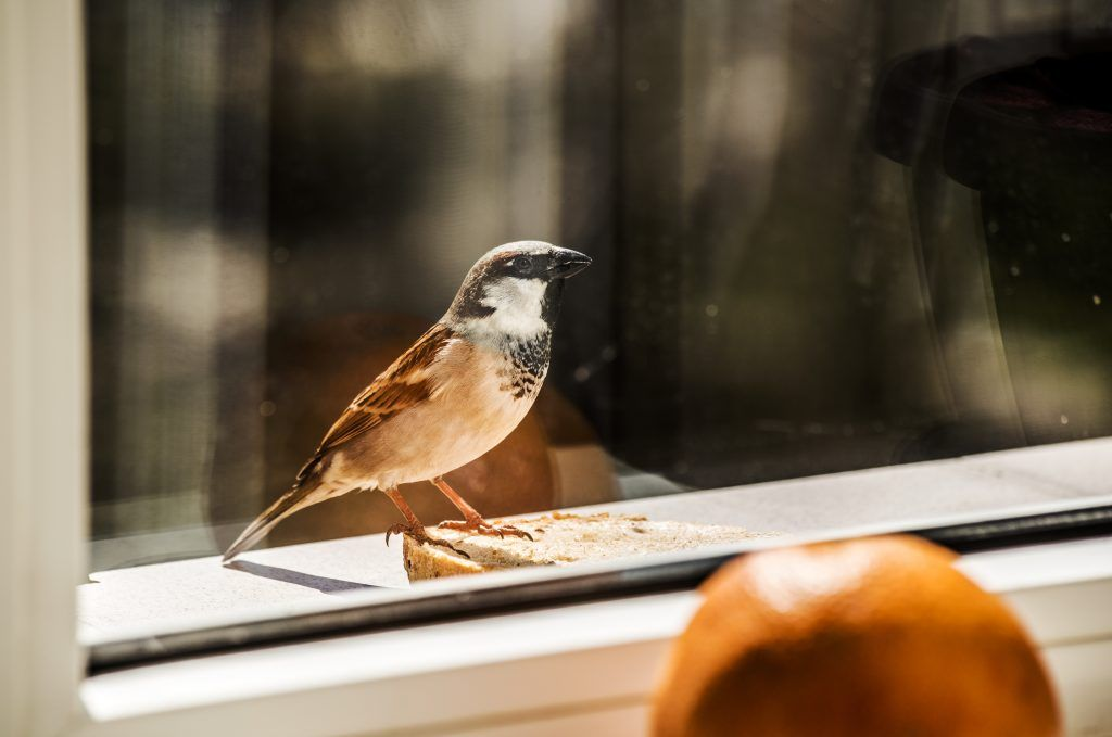 Птица в окно залетела во сне