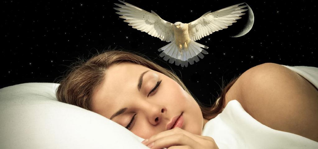К чему снится залетевшая в дом птица: значение сновидения, что предвещает