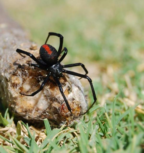 Если буквально за секунду паук из маленького становится огромным, то это важное предостережение: сон ужасный, было противно, но я как бы смирилась, что это временно, все пройдет и будет все хорошо.