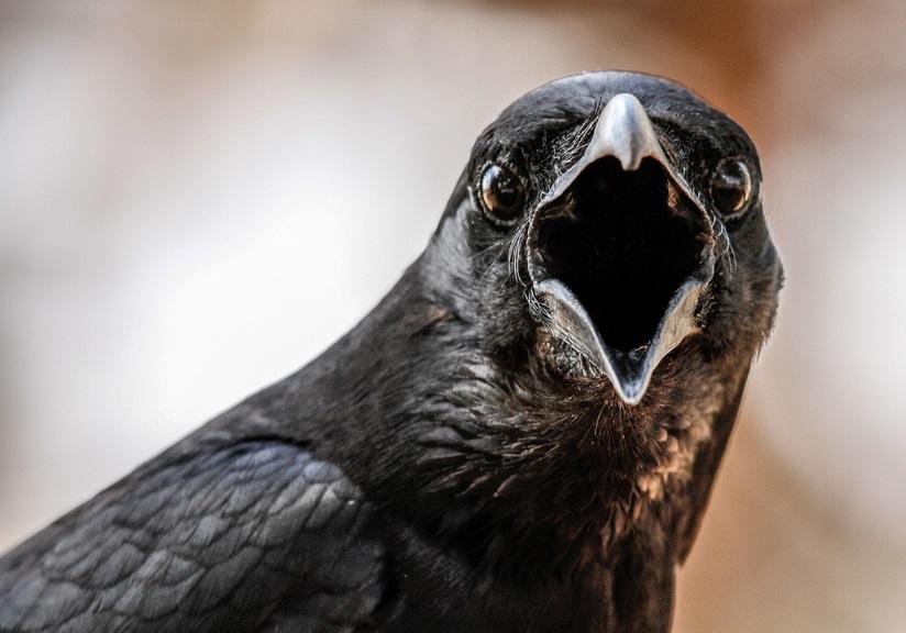 Если вам приснилась стая ворон, кружащая в воздухе, то в скором времени произойдет военный конфликт и пострадает много людей.