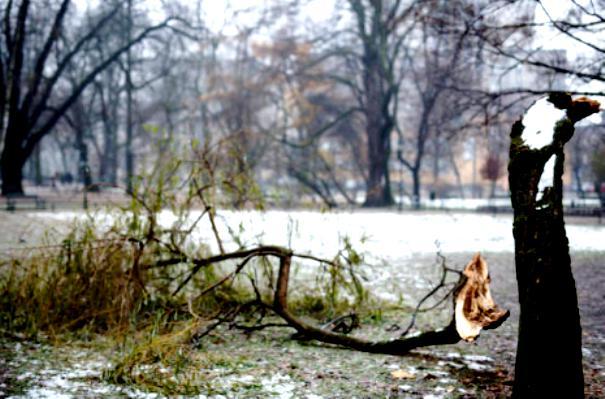 упавшее дерево во сне