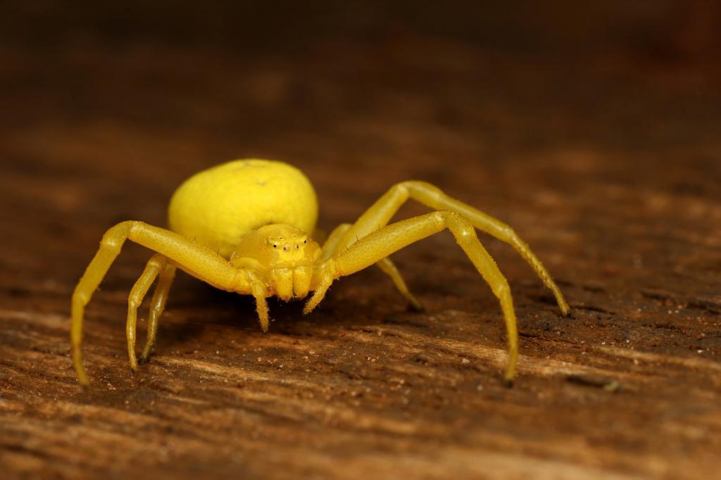Сон о большом пауке для женщины символизирует страх быть одинокой, боязнь расставания с возлюбленным.