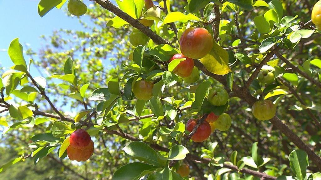 Яблоки на деревьях во сне