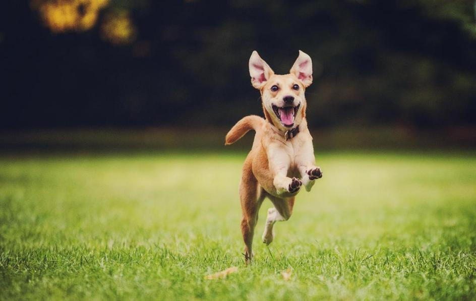 Собака бежит во сне: толкование снов про собак - Tolksnov.ru