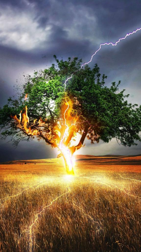 Дерево и молния