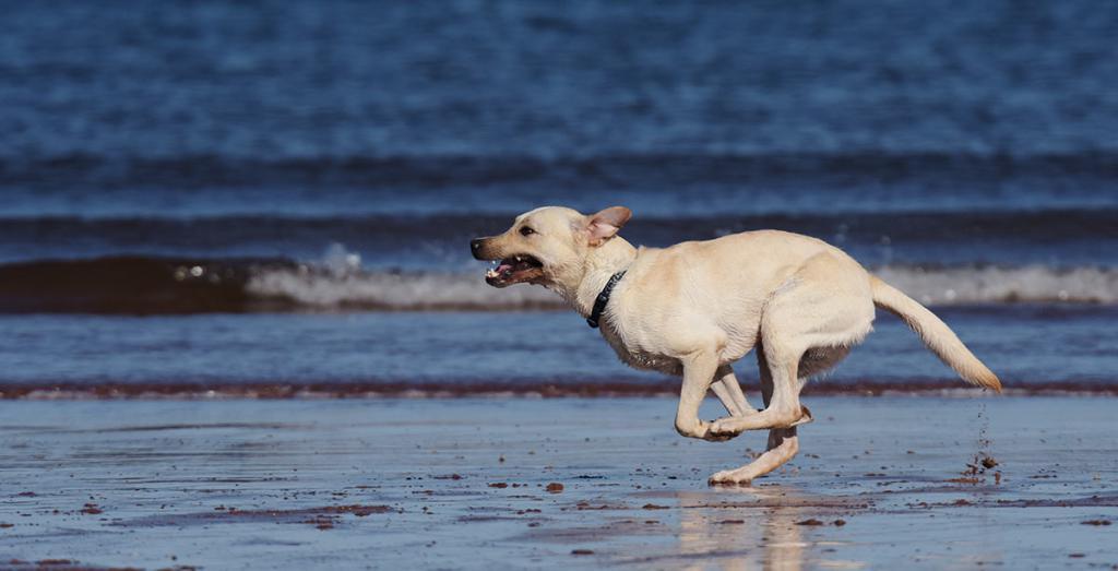 могут картинки бегущей собаки с боку больше больше