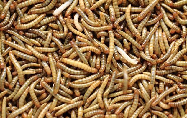 Белые червяки
