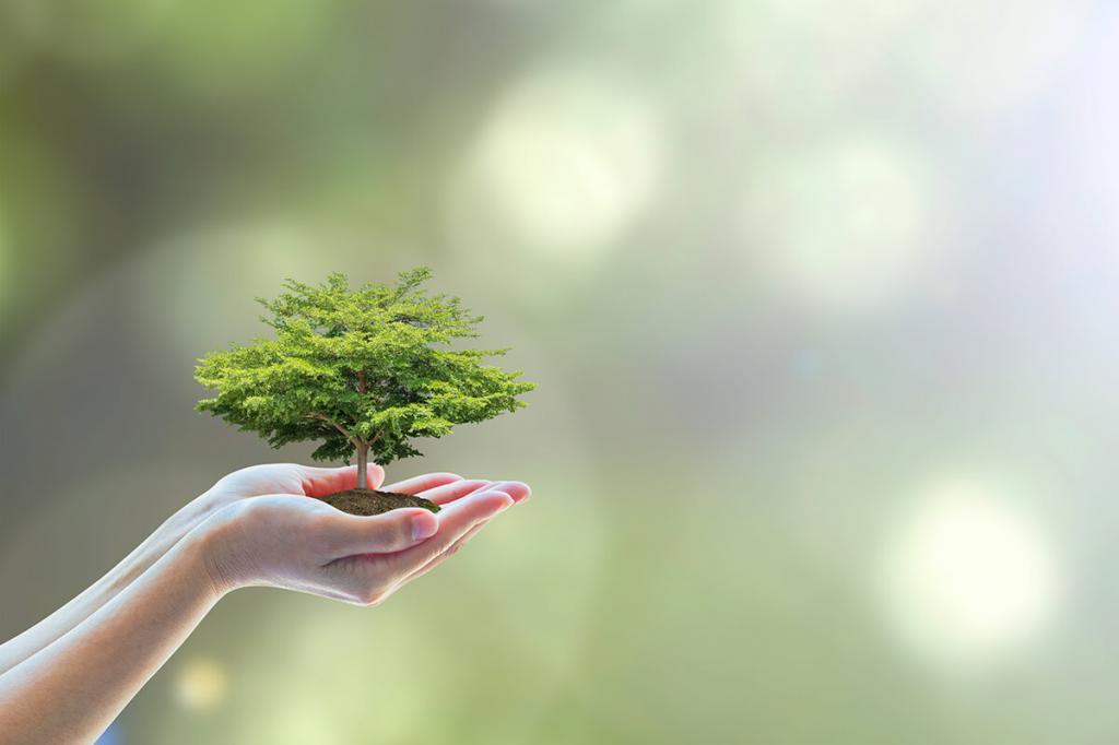 дерево в руках