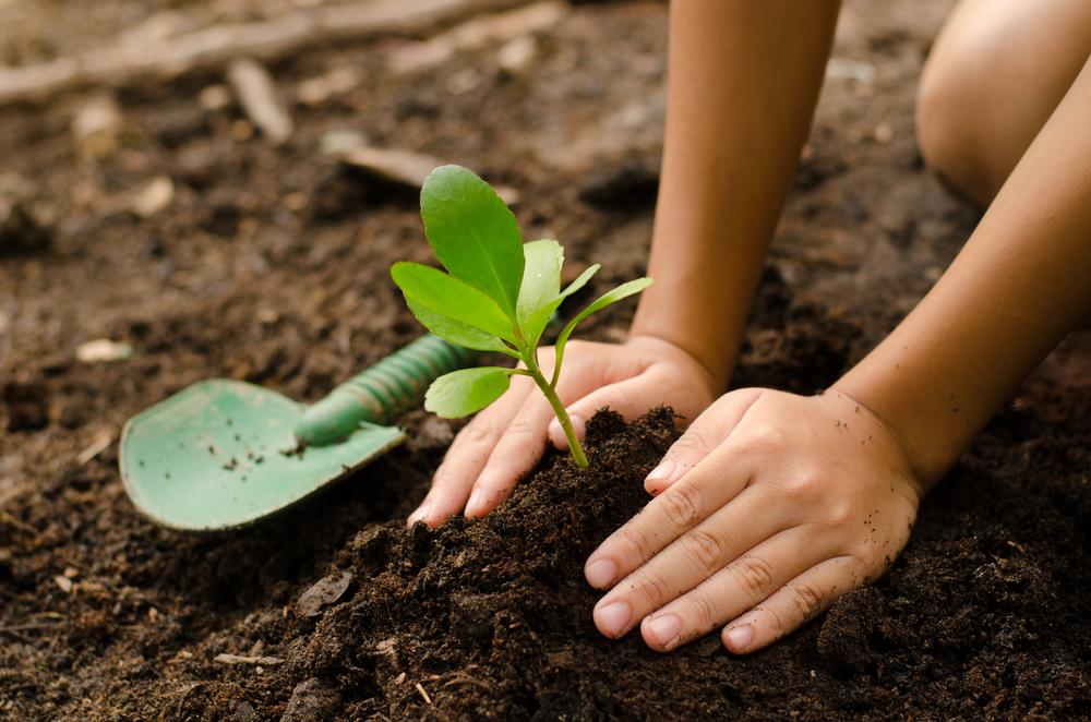 к чему во сне сажают деревья