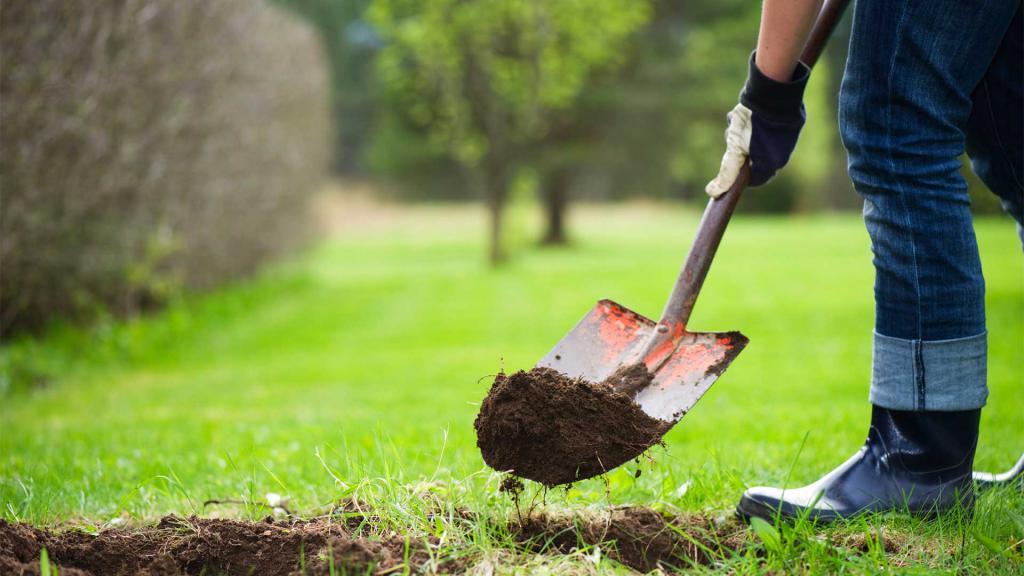 Садить деревья во сне к чему снится thumbnail