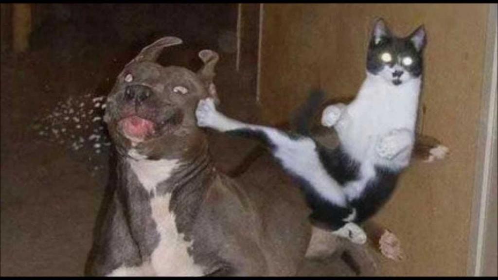 Кошка против собаки