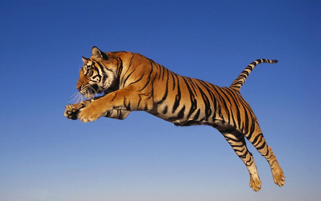 Нападение тигра во сне