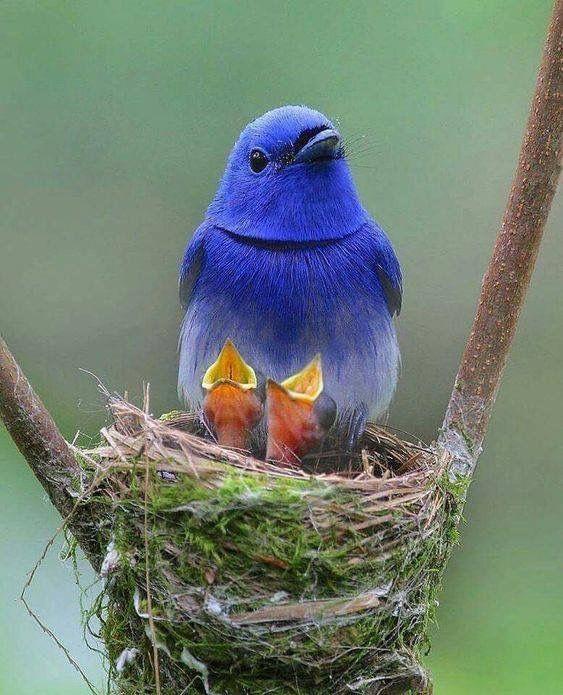 Птица с птенцами