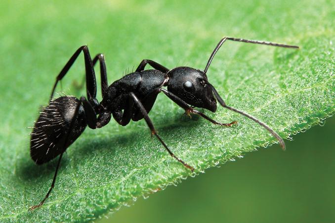Ползет муравей