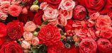 К чему снится красный цвет толкование сновидения по сонникам