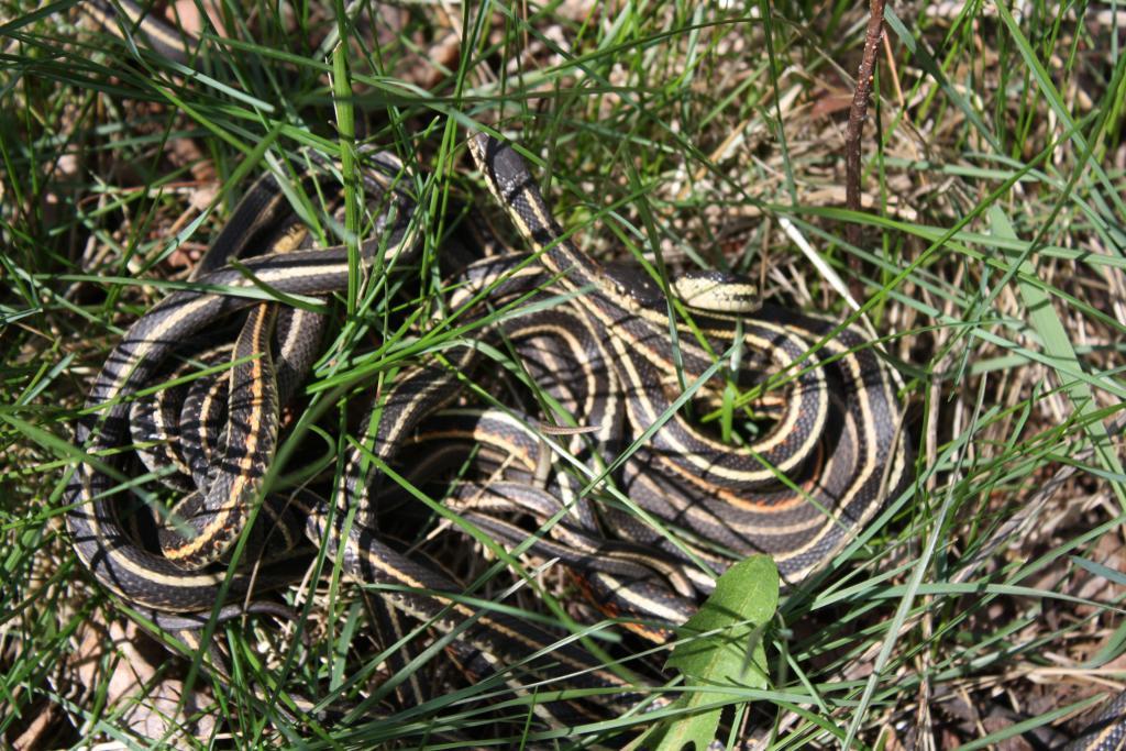 к чему снятся змеи в лесу