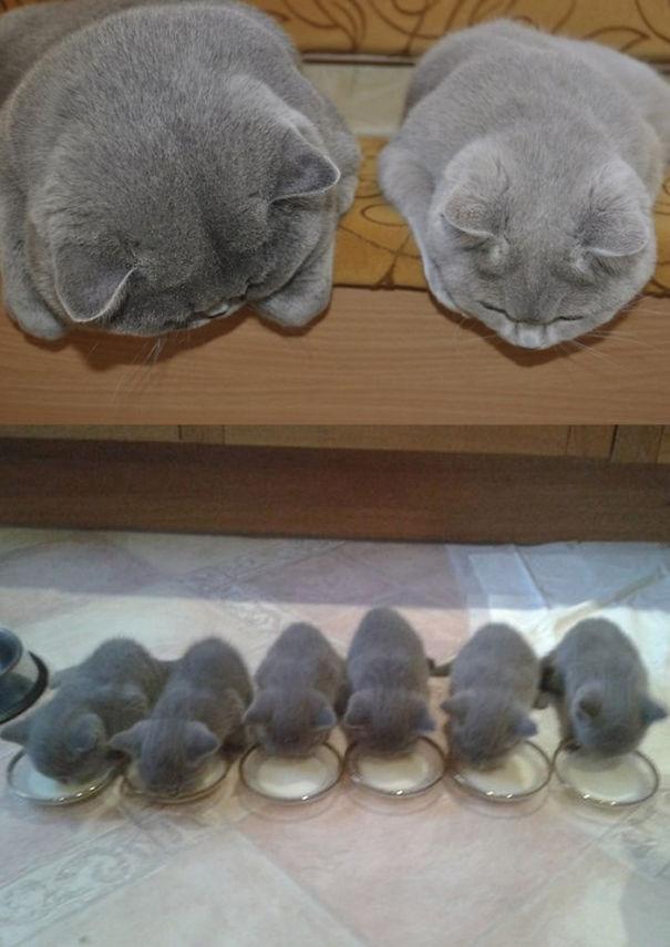 Кот и кошка с котятами