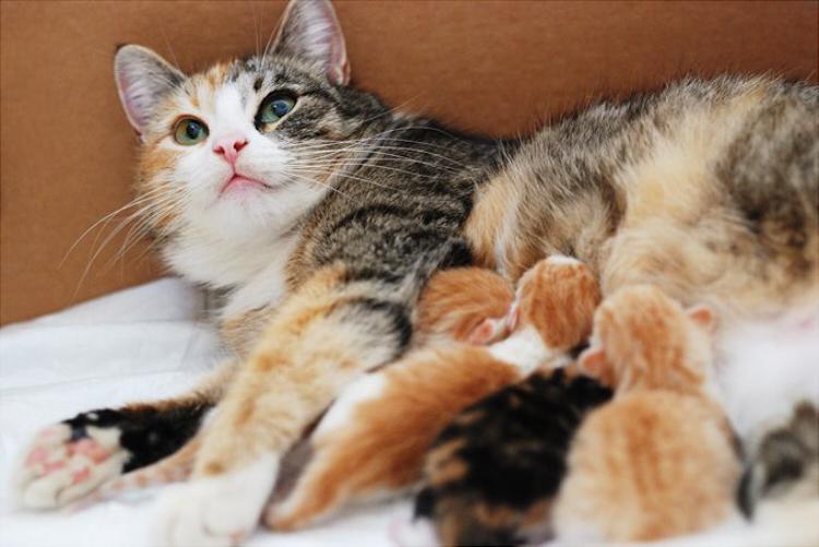 К чему снится кошка с котятами: выбор сонника, значение и ...