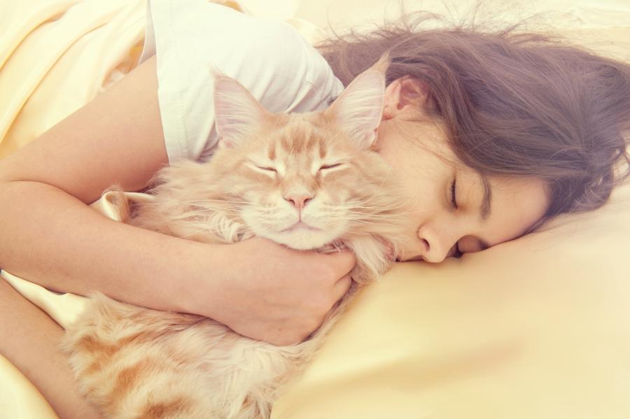 Спящая девушка с котом