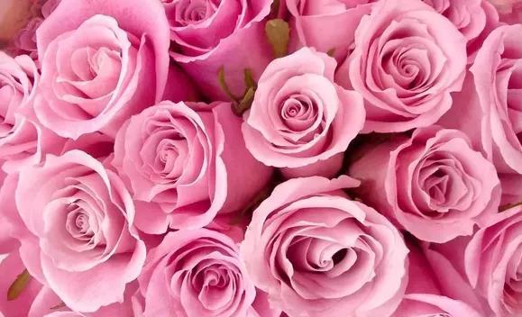 розовые цветы во сне