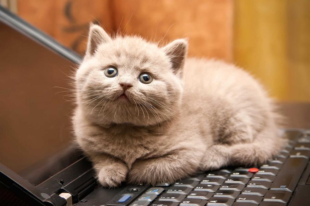сонник кошки сонник миллера