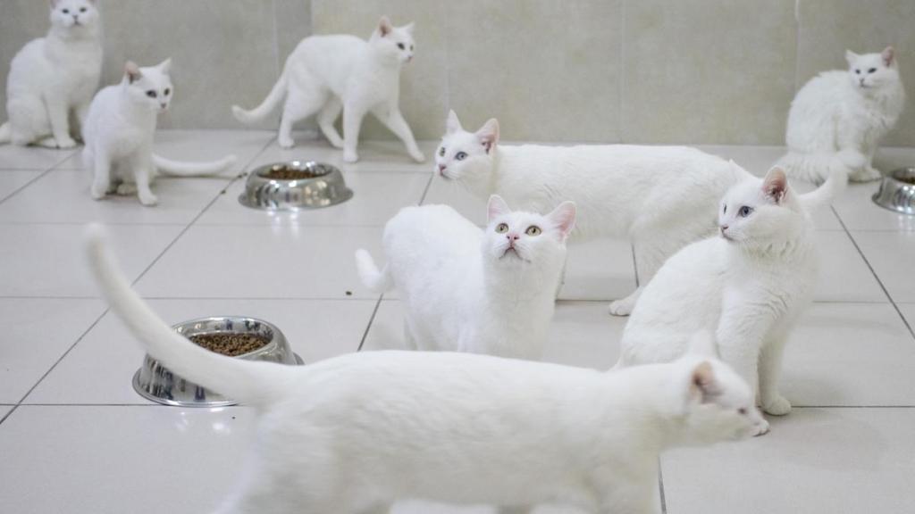 к чему снятся кошки сонник миллера