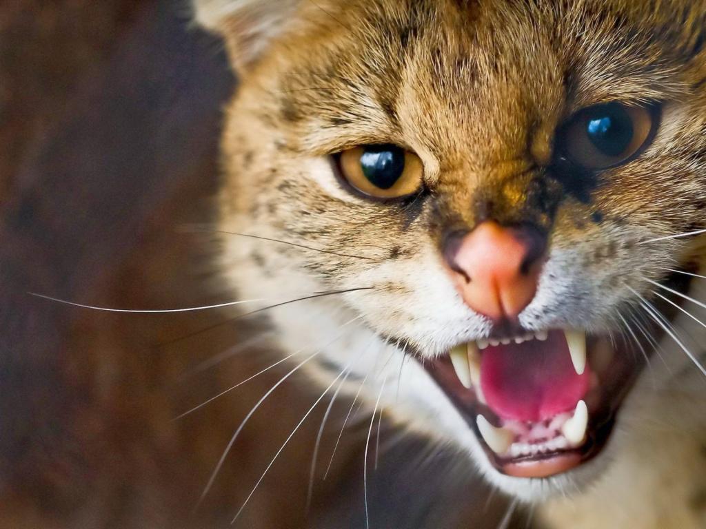 сонник миллера кошки много