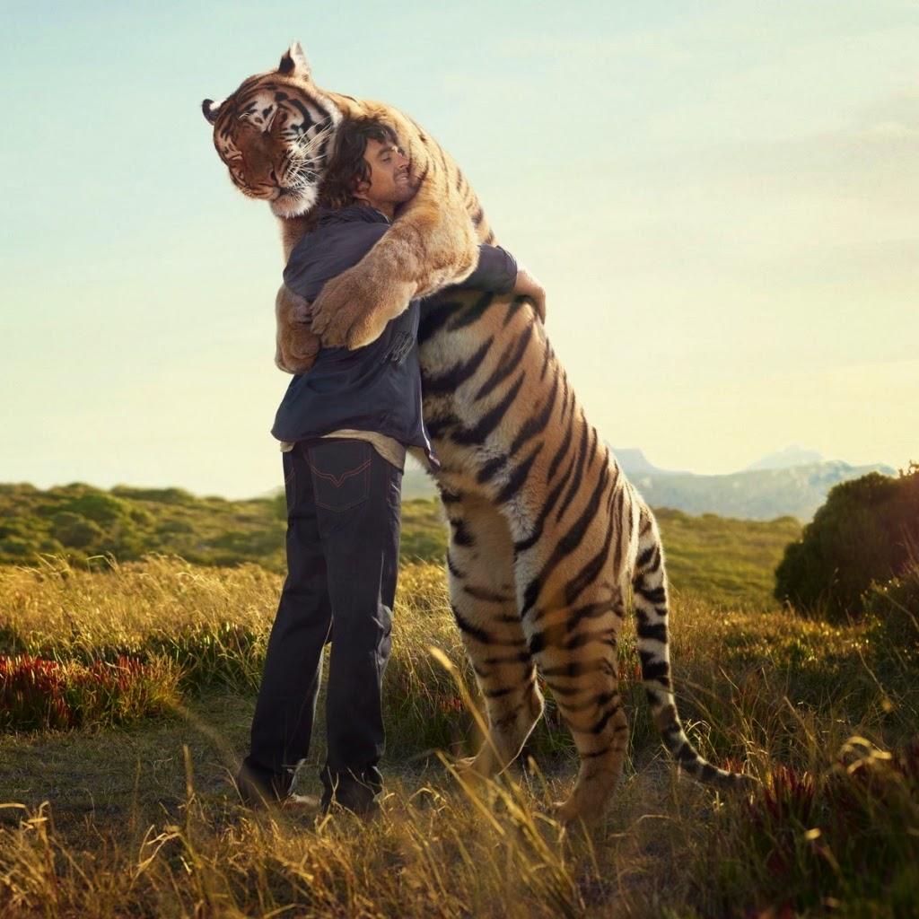 Убегать во сне от тигра: значение и толкование сна