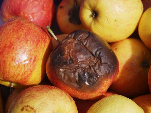 Испорченное яблоко