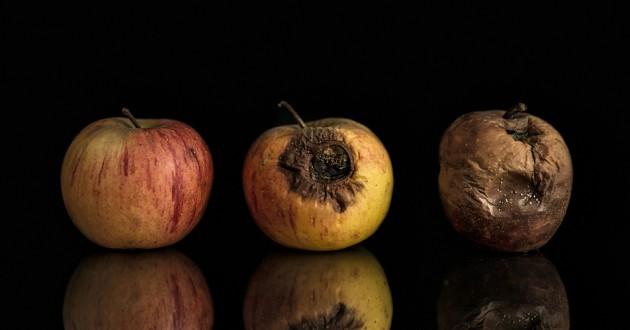 Гнилые яблоки