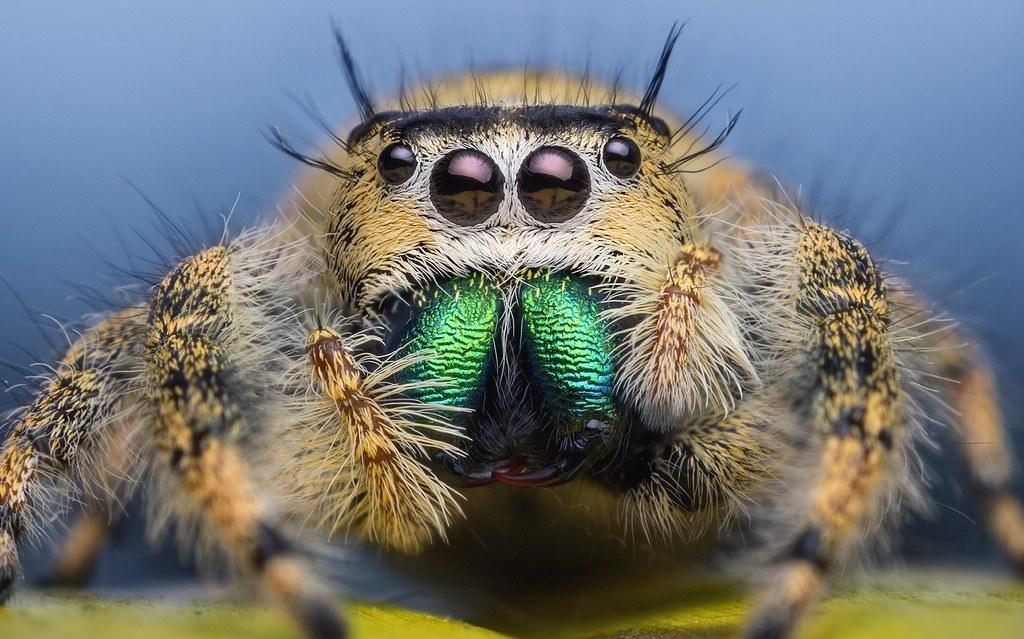 Что делать если увидел большого паука