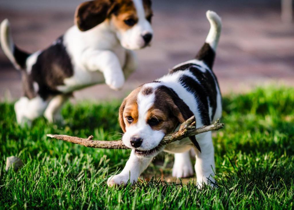 к чему снятся маленькие щенята