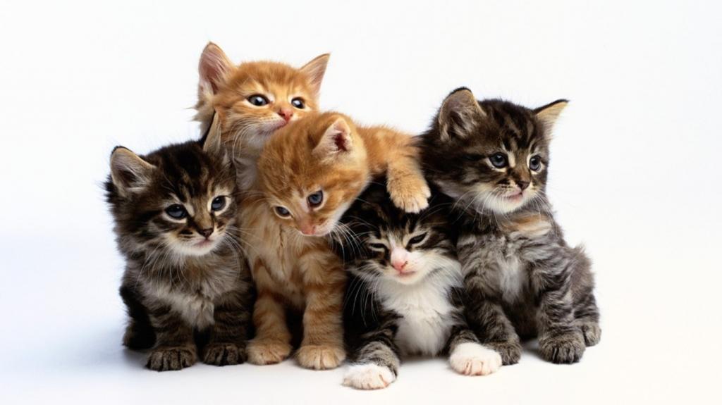 к чему снится что рожает кошка