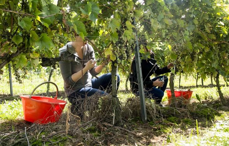 Приснился виноград зеленый