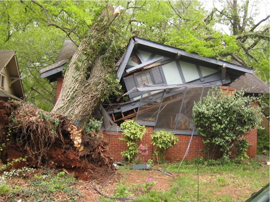 упало дерево на дом
